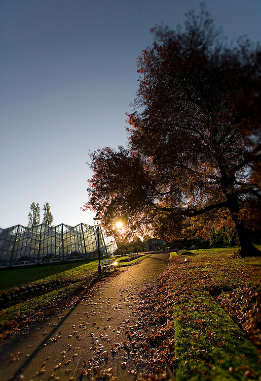Leafy pathway in Ballarat Botanical Gardens at sunset.<br />