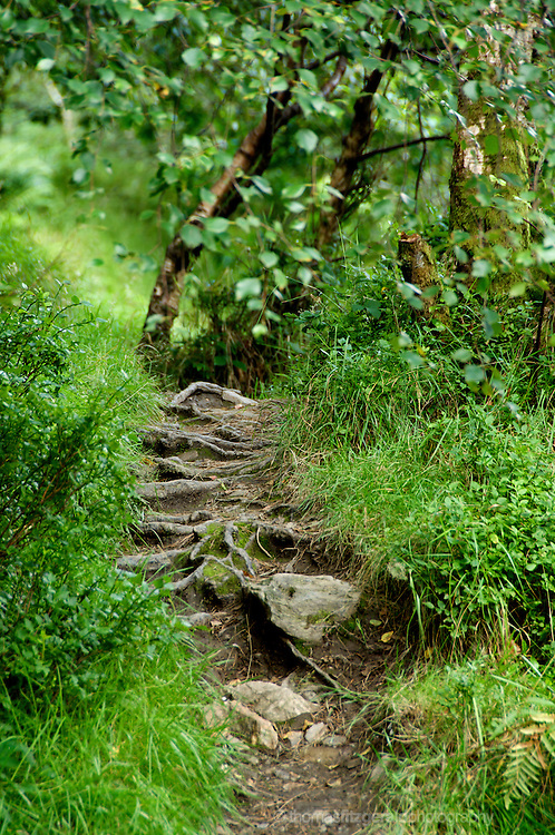 Path through the undergrowth in the forest in Glendalough
