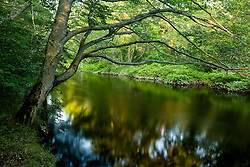 The Taunton River in Bridgewater, Massachusetts.  Summer. Recently designated a Wild ans Scenic River.