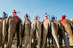 Robot remote controled jockeys at camel races at Dubai Camel Racing Club at Al Marmoum in Dubai United Arab Emirates