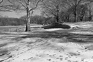 A snow-dusted and gently undulating landscape at North Meadow in Central Park.