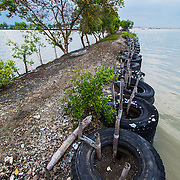 CAPTION: To the right is the sea, and to the left is a fishpond. ACCCRN's local partners Bintari have been working with local communities to construct this flood barrier out of used tyres and mangroves in an attempt to stop the sea from advancing further inland. LOCATION: Tapak, Semarang, Indonesia. INDIVIDUAL(S) PHOTOGRAPHED: N/A.
