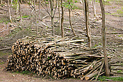 Woodpile in a woodland setting near Condicote in the Cotswolds, Gloucestershire