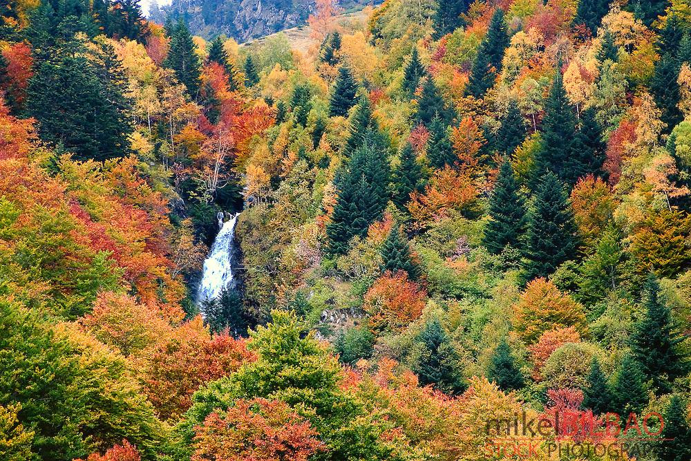 Pomero cascade and forest in autumn. Artiga de Lin. Aran Valley. Lerida province.  Catalonia, Spain, Europe.