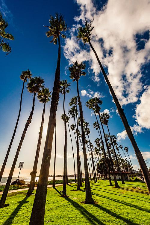 Palm trees  line the bike path between Cabrillo Boulevard and East Beach, Santa Barbara, California USA.