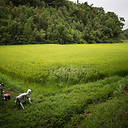 "CHIBA, JAPAN - AUGUST 10:  A robot named ""Super Monster Wolf"" a solar powered robot designed to scare away wild animals from farmer's crops is seen in the rice field in Kisarazu, southwestern Chiba Prefecture, Japan on August 10, 2017. (Photo by Richard Atrero de Guzman/AFLO)"