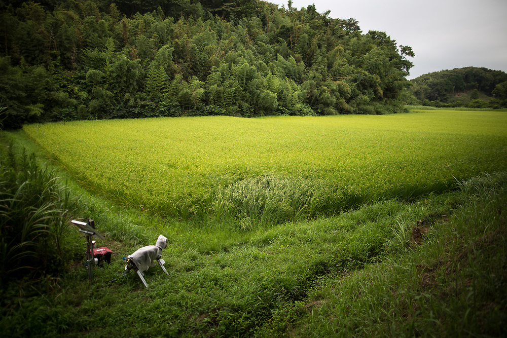 """CHIBA, JAPAN - AUGUST 10:  A robot named """"Super Monster Wolf"""" a solar powered robot designed to scare away wild animals from farmer's crops is seen in the rice field in Kisarazu, southwestern Chiba Prefecture, Japan on August 10, 2017. (Photo by Richard Atrero de Guzman/AFLO)"""