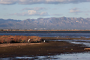The Ebro Delta, province of Tarragona, Spain. Main coastal delta of the Iberian Peninsula with a variety of different ecosystems including lagoons, sand dunes, salt marsh and rice fields, supporting a very large population of breeding waterbirds as well as birds on migration and during the non-breeding period (northern winter). Picture by Manuel Cohen