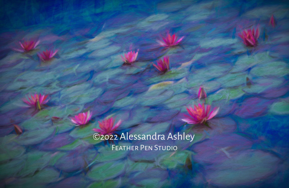 Fuchsia pink waterlilies in full bloom in garden pond. Blend of photorealism and painted effects.