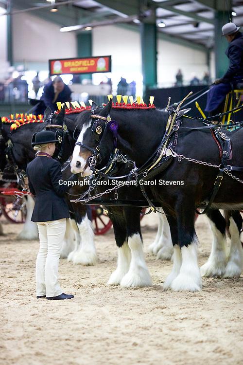 Shire Horse Society Spring Show 2017  Trade Pairs