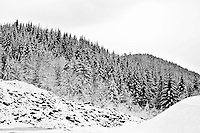Snowy Willamette National Forest in the Cascade mountain range in Oregon in black and white