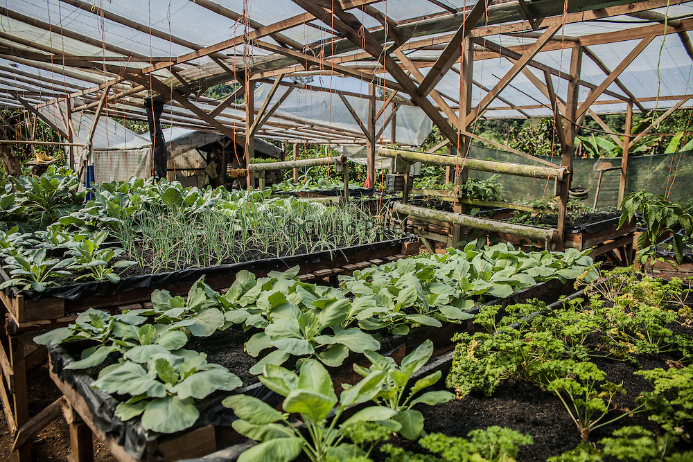 The organic greenhouse of Finca Bellavista