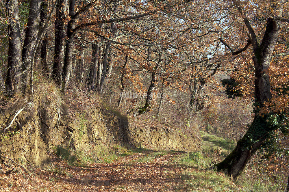 dirt path in woodland during late autumn season