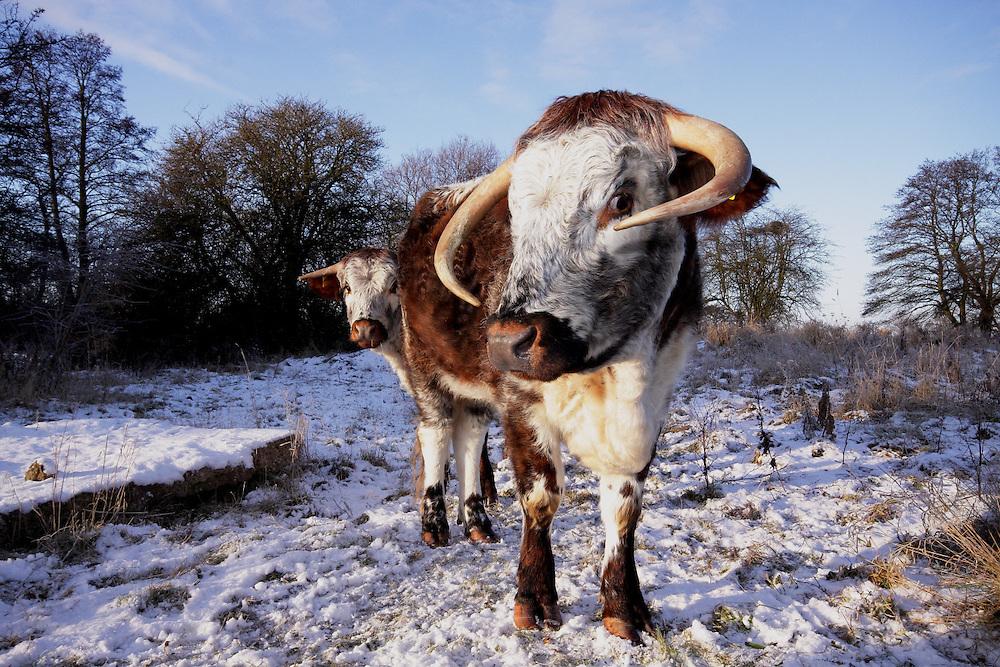 Rural winter scenes in Derbyshire