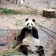 Pandatalo