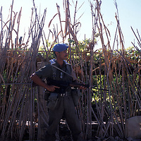 A member of UNIFIL patrols along a row of corn stalks in southern Lebanon in 1981.