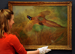 © Licensed to London News Pictures. 23/01/2012, London, UK. An employee straightens 'Flying Pheasant' by Archibald Thornurn (British, 1860-1935) the watercolour is expected to fetch 30,000-40,000GBP. Photo call at Bonhams auctioneers in Central London for 19th Century Paintings sale.  Photo credit : Stephen Simpson/LNP