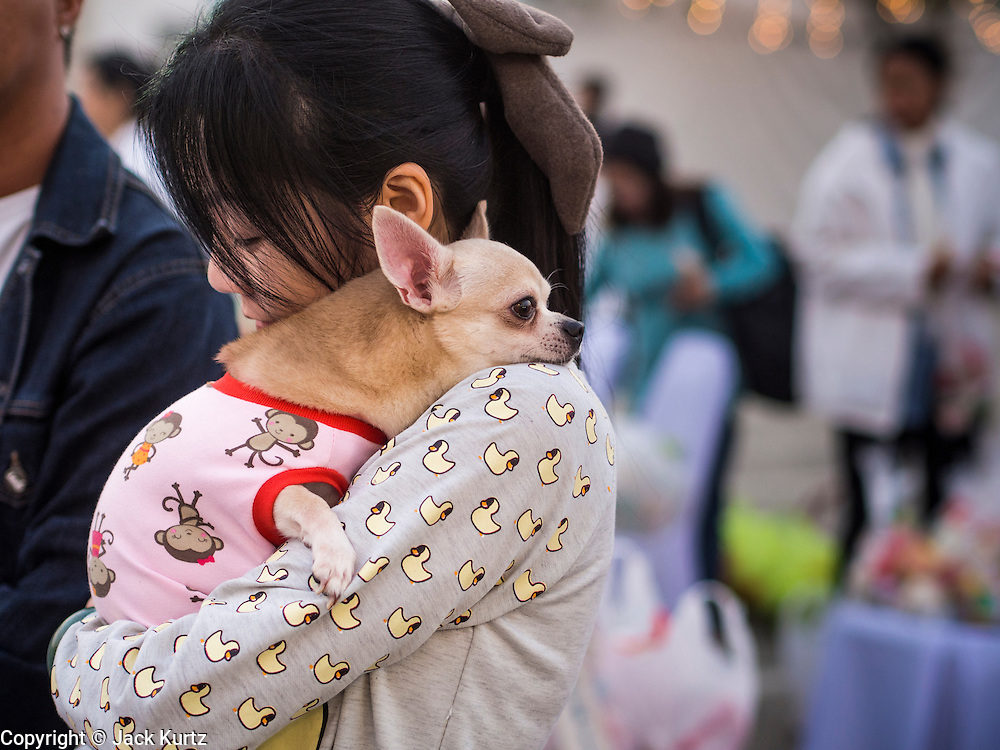 01 JANUARY 2014 - BANGKOK, THAILAND: A woman holds her chihuahua dog, which was wearing a doggie sweater because of the unseasonably cold weather, in front of Bangkok City Hall. Several thousand people, mostly Bangkok city officials, gathered on the plaza of Bangkok City Hall Wednesday for the traditional New Year merit making ceremony.     PHOTO BY JACK KURTZ