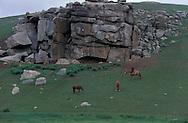 Mongolia. Orkhon valley landscapes near  Hahorin       / paysage de la vallée de l'Orkhon  Karakorum  Mongolie   /     L0009332  /  R20582  /  P118350