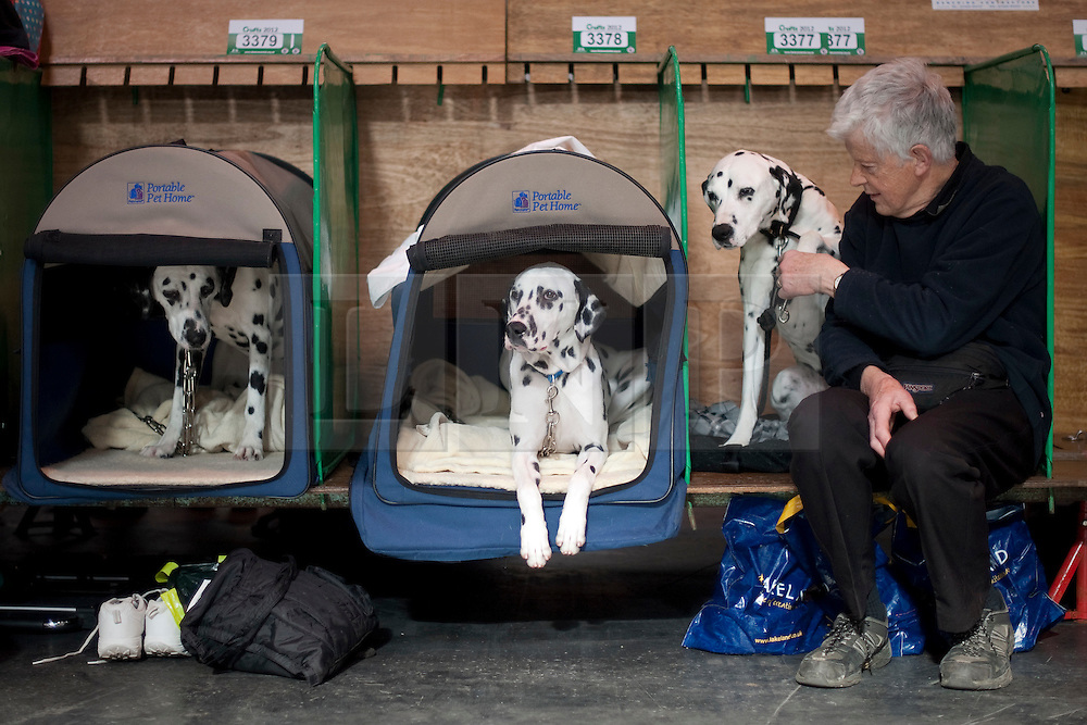 © London News Pictures. 08/03/2012.  Trevor Pierson waiting for his dalmation dogs to go on show L to R Candy, Cory and Katy. Day one of Crufts at the Birmingham NEC Arena on March 8, 2012 in Birmingham.  Crufts, which is the largest annual dog show in the world, hosts over 20,000 dogs and owners who compete in a variety of categories. Photo credit : Ben Cawthra/LNP