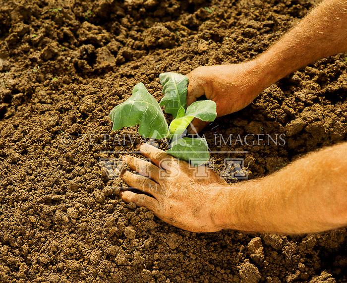 Agricultura, plantio de fumo, Santa Catarina, Brasil. Foto de Ze Paiva/Vista Imagens