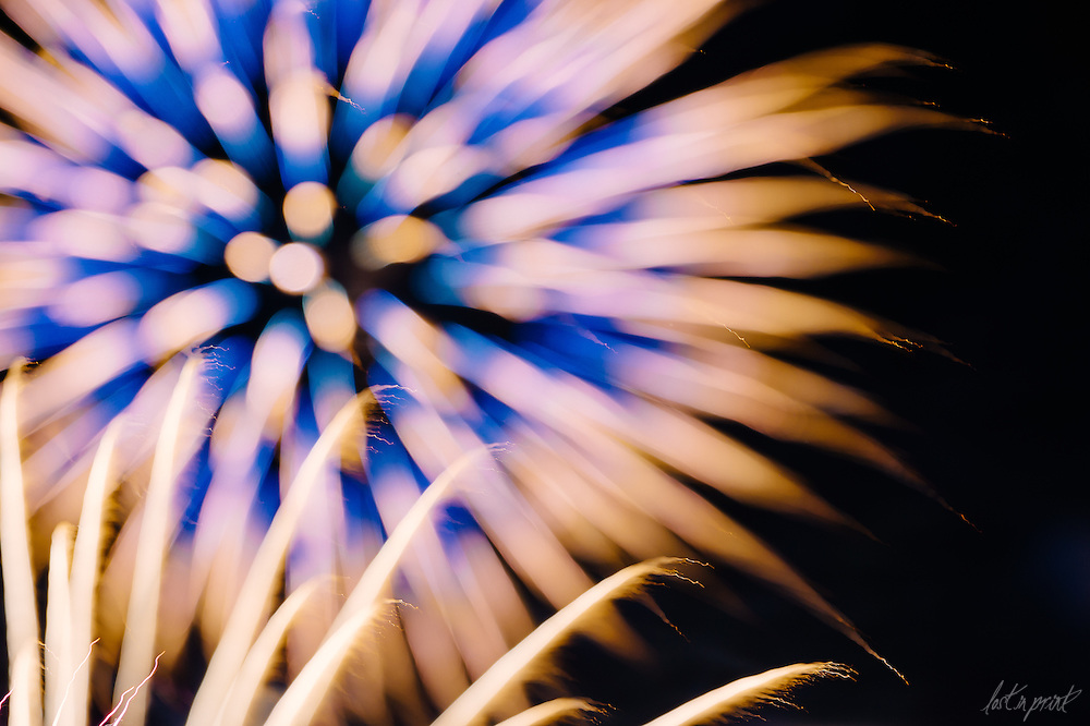 Fire in Bloom - An artistic photographic series which commemorates our country's freedom through unexpected, beautiful firework imagery.