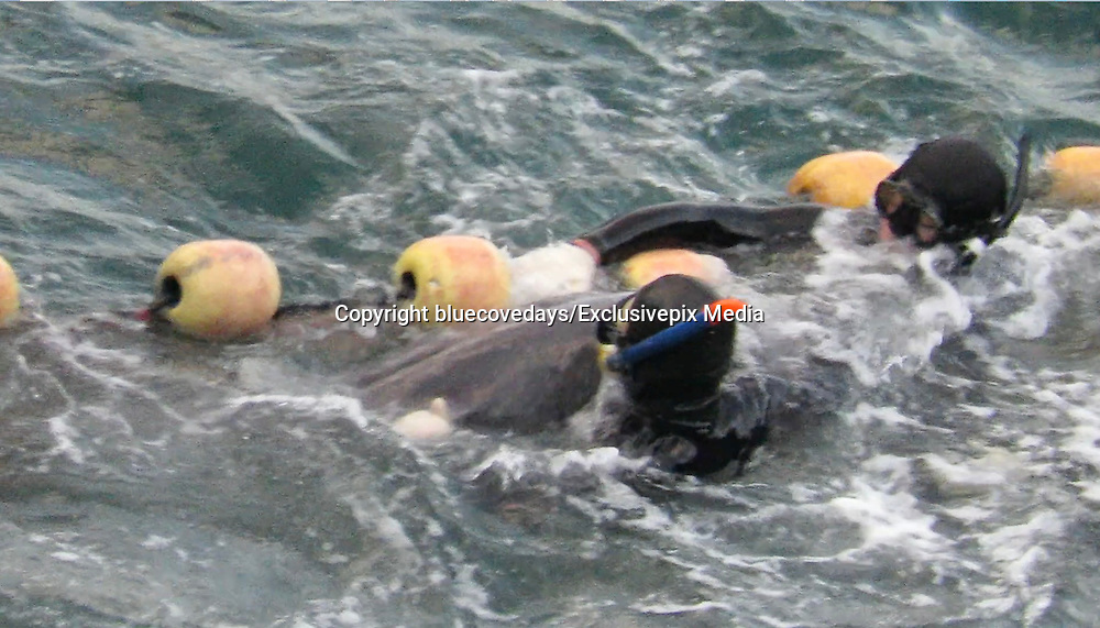 """EXCLUSIVE<br /> SHOCKING VIDEO show how one Dolphin tried hard to escape being taken captive<br /> <br /> This distressing video was shot in Taiji Japan, on January 21st, Day one of this super pod of dolphins captive selection.<br /> <br /> Captured by Liz Cater  she says: """"The dolphins were driven into the cove on January 19th and it is estimated to be anywhere between 250-300 dolphins trapped in the cove"""" <br /> <br /> """" The pod had a lot of juvenile dolphins amongst it. this was day one and literally the first part of the pod to be selected, it was 5 minutes into selection when this occurred. The pod was panicked and they knew they had been separated from their family.""""<br /> <br /> """"in one image of a dolphin you can see it vomiting, and to me this looks like his/her own intestines. This was not the only dolphin captured to be vomitting from the stress endured over 5 days""""<br /> <br /> Liz went on to say while witnessing this very distressing moment """"The dolphins don't jump over the nets because they are foreign to them, they don't know whats on the other side, and being wild, have never encountered them before. Many do however get caught in them from the frenzy and, some can get over from such frenzy.""""<br /> <br /> """"As you can see in this, one dolphin nearly got over but was grabbed and  wrangled back over into the selection area. This was quite a small dolphin to, a juvenile. The selection area is very shallow, i believe it is, because the men in most cases look like they are standing , they are not appearing to be treading water when they are stationary and looking for their next victim"""" <br /> These shallow depths work against the dolphins, and makes it easier for the divers to grab them under water . <br /> <br /> The 100 dolphins taken have all now been transferred to small over crowded sea pens where their spirit will now be broken. The will starve them more for a few days, then being the process of feeding the dolphin dead drugged fish.<br /> """"shoving pil"""