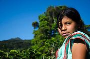 Tierras Altas, Boquete Chiriqui. Cultivos de café.©Victoria Murillo/istmophoto.com