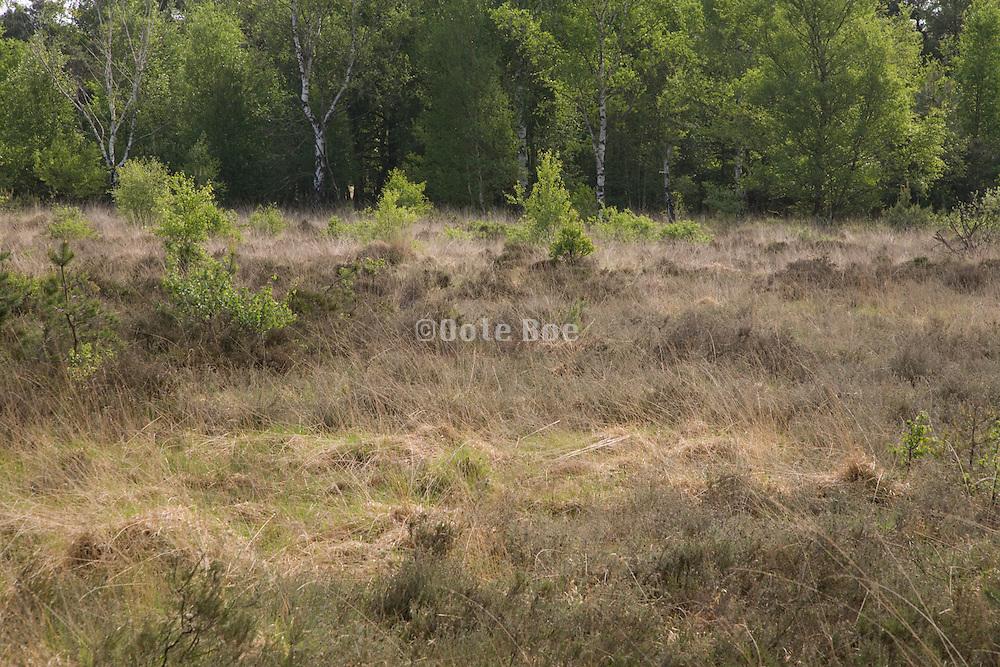 heath land Holland Noord Brabant
