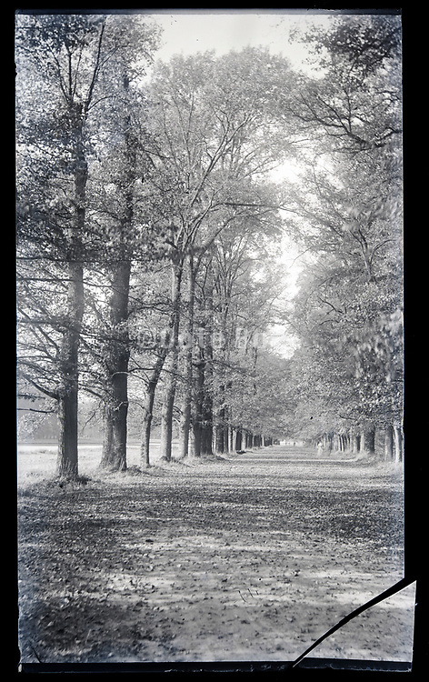 wide countryside road lined with trees on a broken glass plate circa 1920s