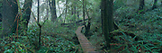 Path through woods, Pacific Rim National Park, Vancouver Island, British Columbia, Canada<br />