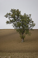 A single tree stands in a plowed field.