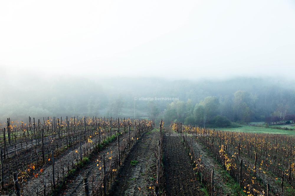 COVIBIO, COLLECTIVE wine producers , Italy, Piemonte