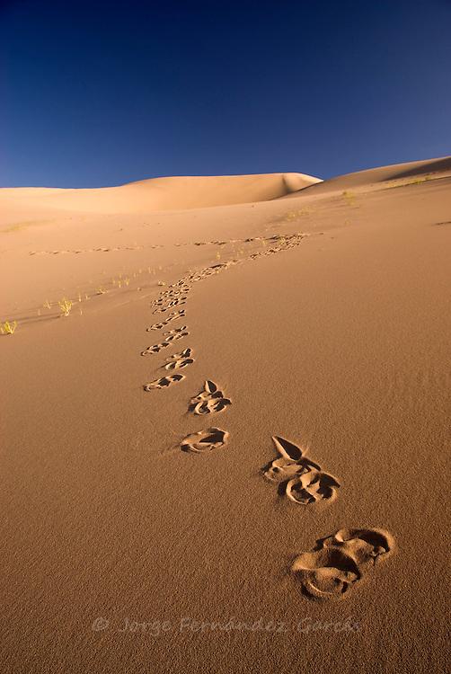 Landscape of the Khongoryn Els dunes, Gobi desert, Mongolia.