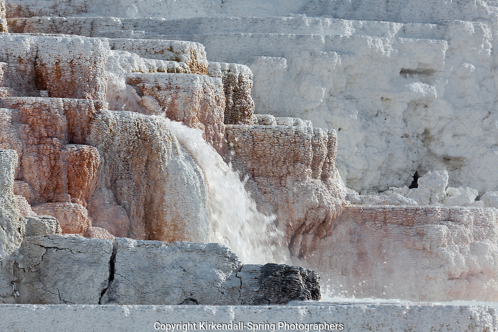 WY00504-00...WYOMING - Lower Terraces of Mammoth Hot Springs in Yellowstone National Park.