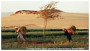 Dakhla, Egpypt 030206   Farming brothers work a field alongside the edge of the Saharan desert. (Essdras M Suarez/ Globe Staff)