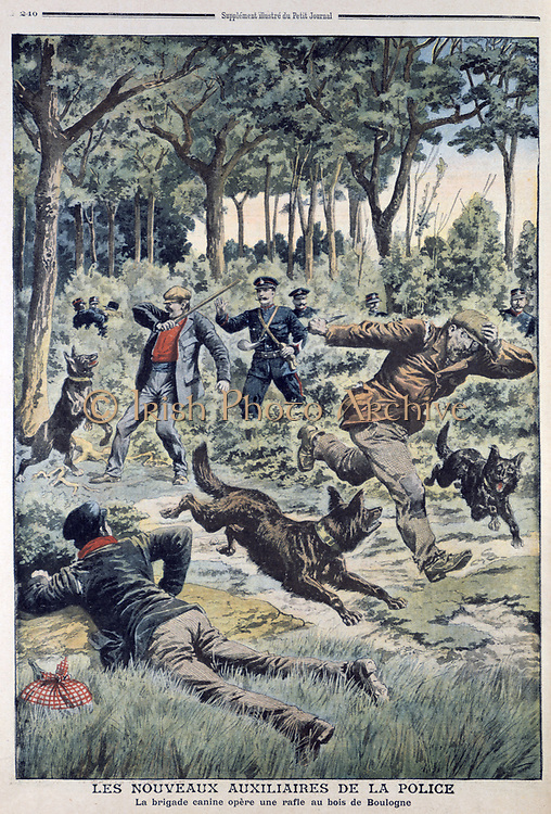 Newly introduced dog section of the Paris police making arrests in the Bois de Boulogne. From 'Le Petit Journal', Paris, 28 July 1907.