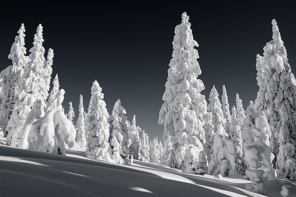 Tracie Spence - Winter Wonderland