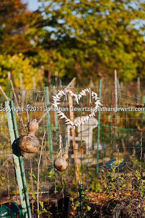 Gourds and a heart made of sea shells hang on a wire fence in a community garden. WATERMARKS WILL NOT APPEAR ON PRINTS OR LICENSED IMAGES.