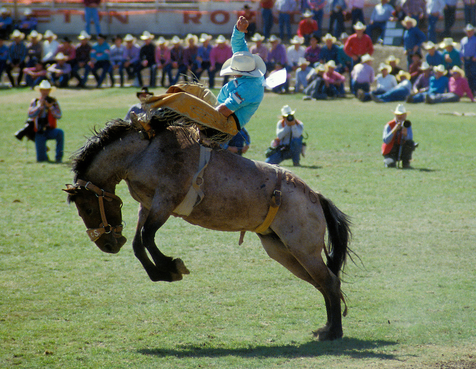 Cowboy on horse during bronc riding event at Pendleton Roundup Rodeo; Umatilla County, northeastern Oregon.