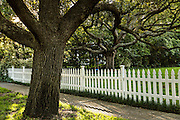 Live oak trees and a white picket fence on Sullivans Island, SC.