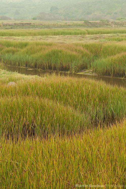 Pescadero Marsh Natural Preserve, California