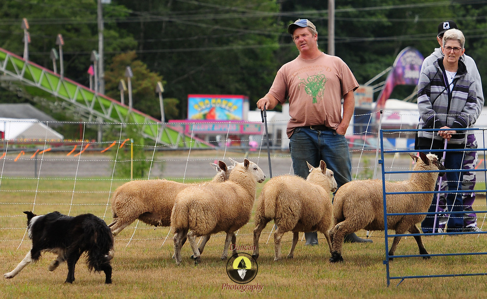 TOPSHAM, Maine- 8/8/17 -- Joe Grady of Two Coves Farm in Harpswell, Maine leads a demonstration of sheep herding at the Topsham Fair on Tuesday with his dog, Nuala, 3, a Border Collie. The fair is open now and closes on Sunday, August 13.  Photo by Roger S. Duncan for the Forecaster.