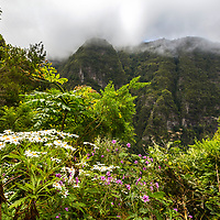 White and pink flowers in the mountain