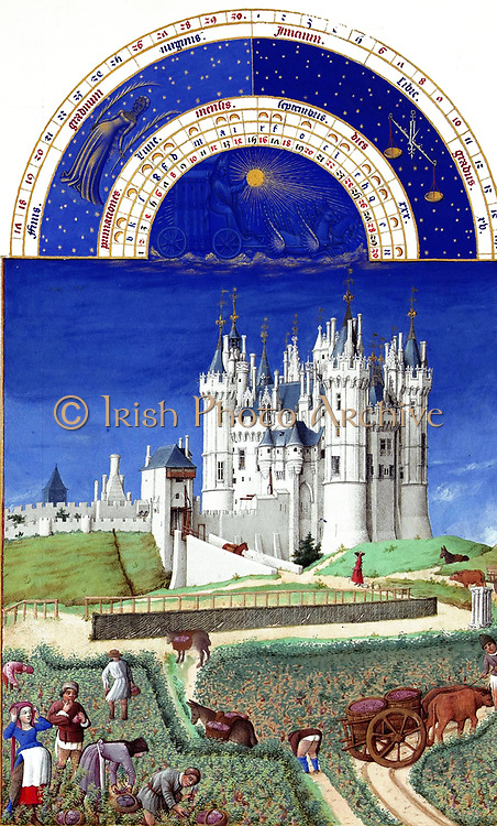 'The Très Riches Heures du Duc de Berry Is a French Gothic illuminated manuscript. The Très Riches Heures is a prayer book created for John, Duke of Berry, by the Limbourg brothers between 1412 and 1416. The book was completed by Jean Colombe between 1485 and 1489. The manuscript is held at the Musée Condé, Chantilly, France. this folio (September)shows people gathering grapes while a man and a woman, apparently pregnant, rest. In the distance is the castle of Saumur in Anjou.'