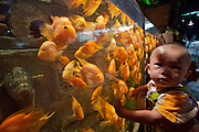 Beijing Aquarium. Rainforest Adventure. Little boy with blood parrot cichlid fish.