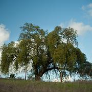 Senic views at Eden Hills, Escondido, CA.