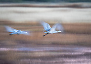 Long exposure catches the motion of flight