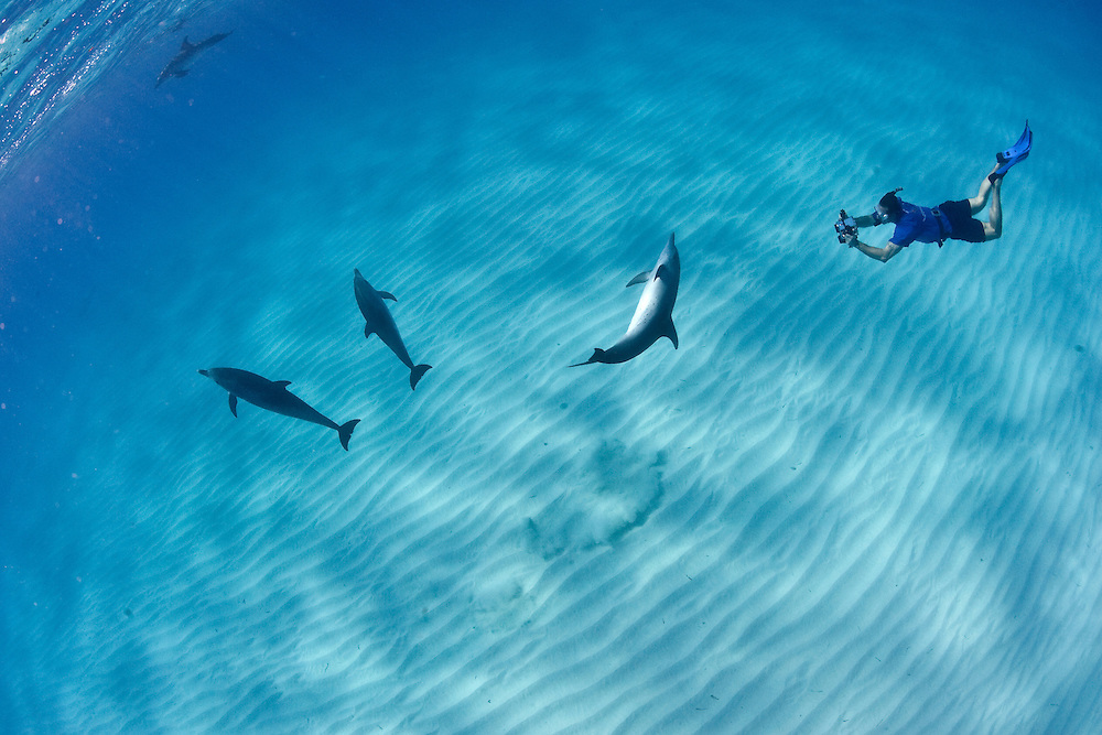 Dolphin in the Caribbean.