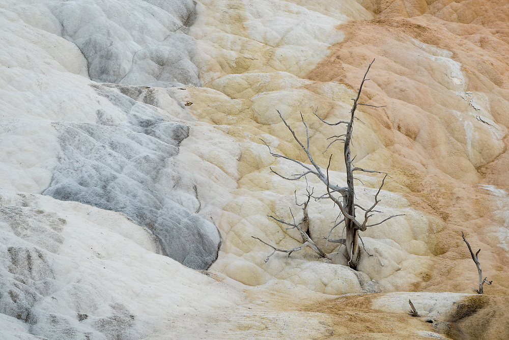 Mammoth Hot Springs Lower Terraces, Yellowstone National Park, Wyoming.